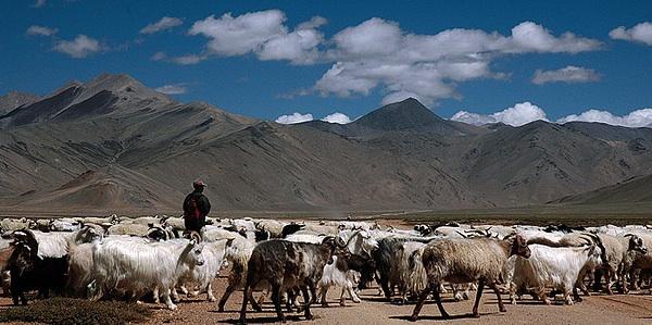 shepherd.jpg