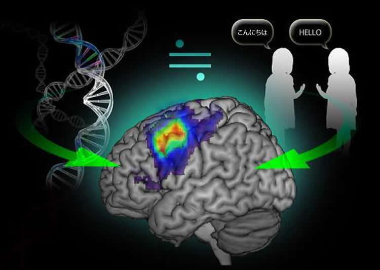 genetics-environment-language-neurosciencenews.jpg